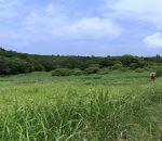 夏の皿ケ嶺