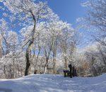 冬の皿ケ嶺
