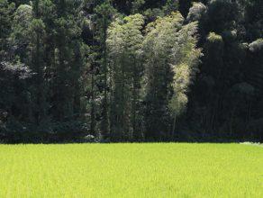 東谷地区の田んぼ